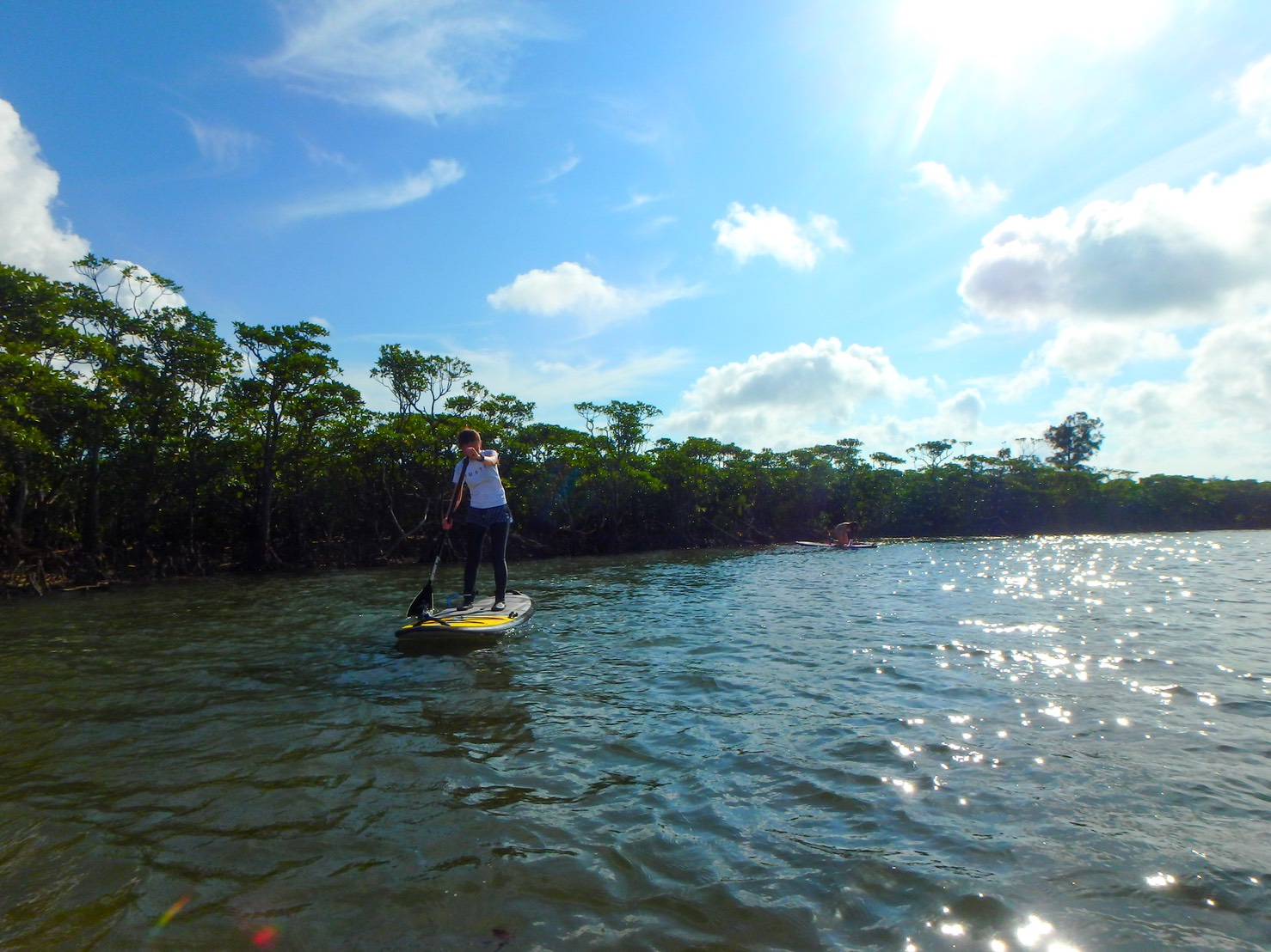 紅樹林 板槳探險之旅