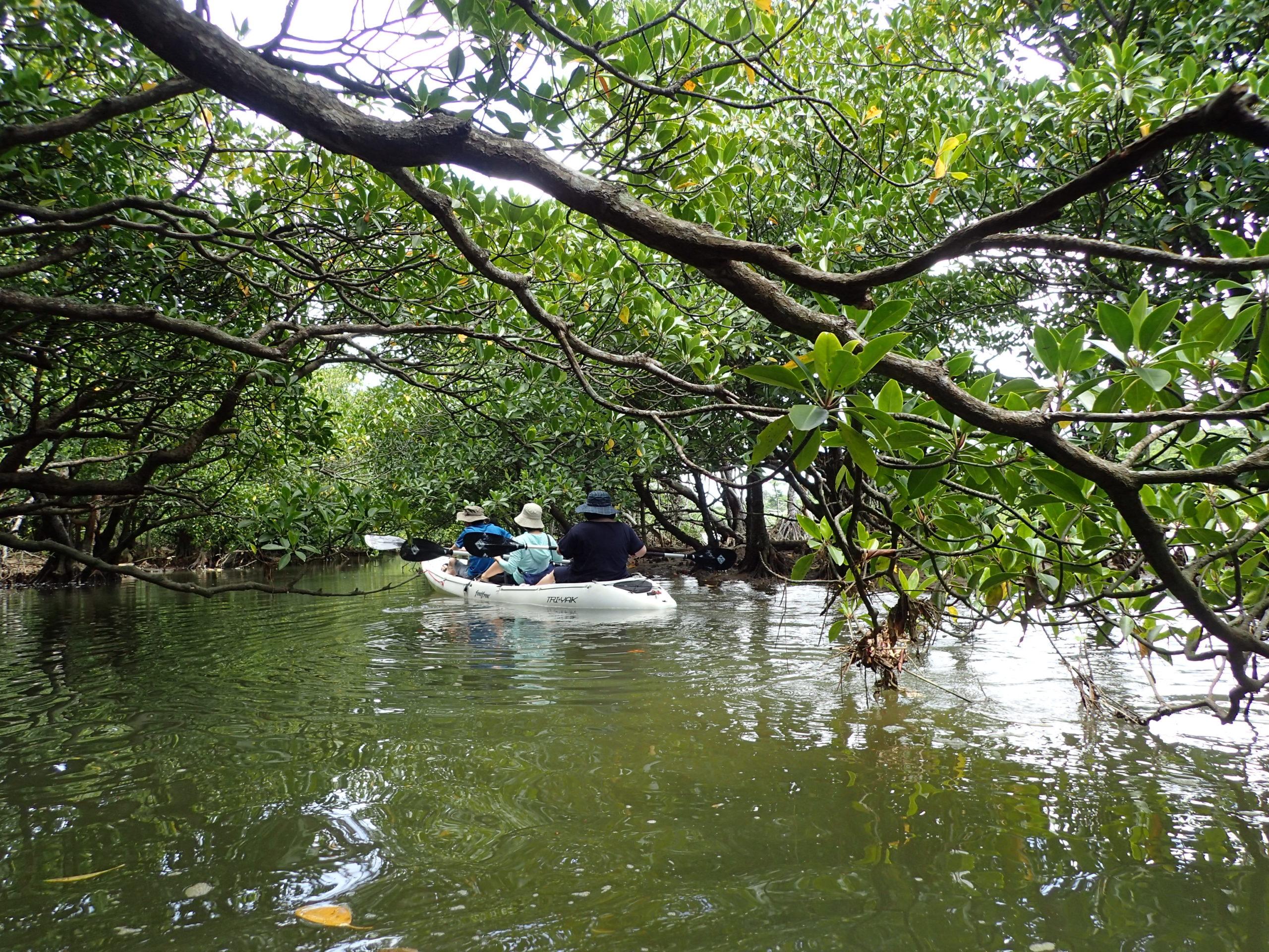 紅樹林 獨木舟探險之旅